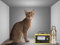 Schrödinger cat