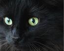 Judy's eyes.jpg