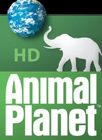 Animal Planet Hd United States Logopedia The Logo And Branding