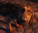 El Cachorro