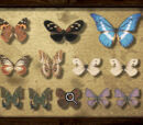 Specimen Collection Puzzle
