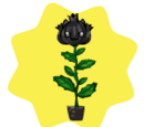 Homegrown Black Cat Rose