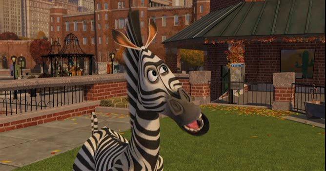 madagascar zebra - photo #36