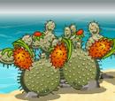 Bomb Cactus
