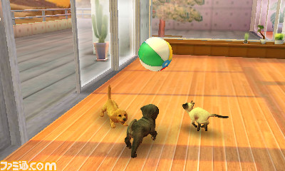 Dogs And Cats Playing Together Image Dogs And Cat Playing
