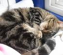 Morwen's Cat