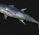 Master Tuna