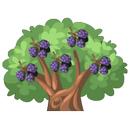 Blackberry Tree
