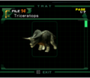 Triceratops (file)