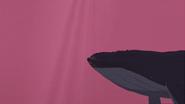 S1 E8 Whale in ocean