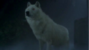 Debbie in wolf form.png
