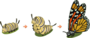 Caterpillar Life Cycle.png