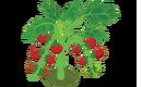 Cherry Tomato (200).png