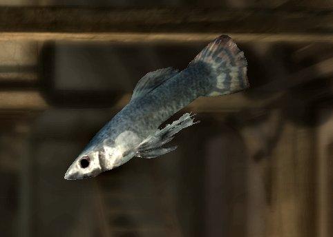http://img4.wikia.nocookie.net/__cb20111114162708/elderscrolls/images/7/7d/Abecean_longfish.jpg