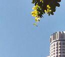 US Bank Tower