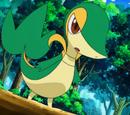 Pokémon de Trip