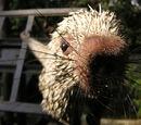 T-Rex the Porcupine