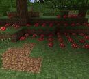 Field of Mushrooms