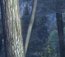Unknown Forest: Dark Night