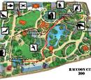 Raccoon Zoo