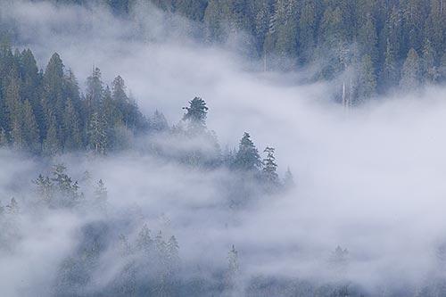Image - Foggy-forest-valley.jpg - Superpower Wiki - Wikia Fairyland