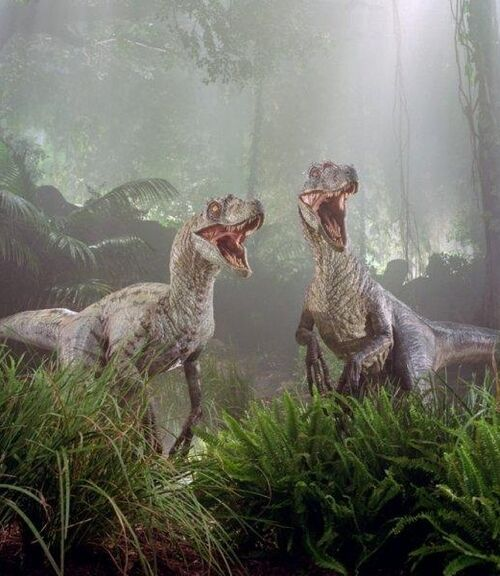 velociraptor movie canon jurassic park wiki wikia