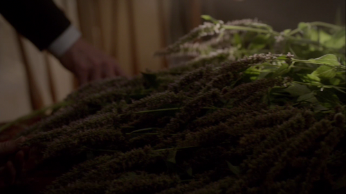 Vervain - The Vampire Diaries Wiki
