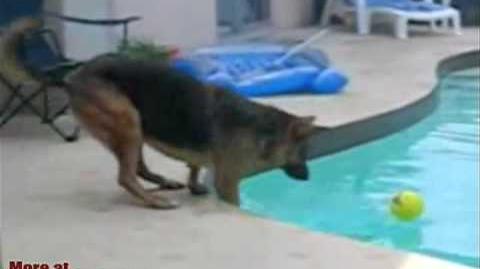 Dummer Hund