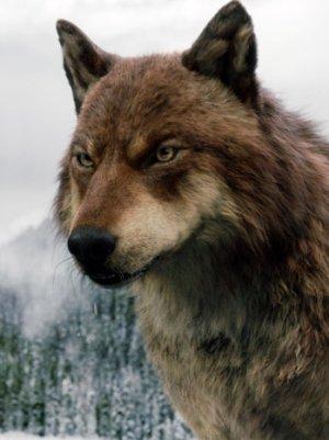 Jared Twilight Wolf Form Wolf form
