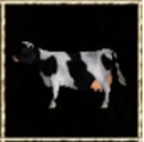 Black-White Cow.jpg