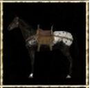 Black Appaloosa Steppe Horse.jpg