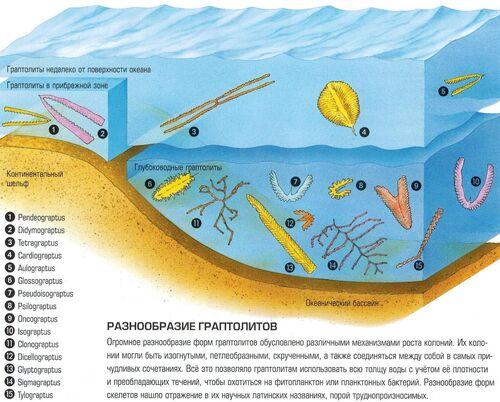 планктон фото и размеры
