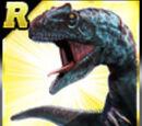 Rare Allosaurus