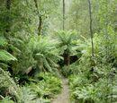 Cretaceous Rainforest (PR)
