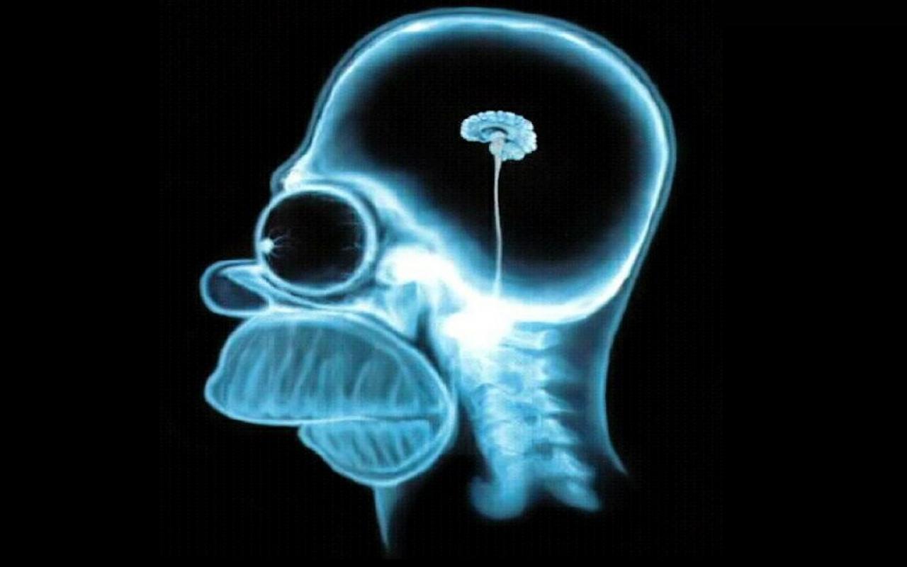 Homer-simpson-brain,1280x800,18857.jpg