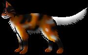 Mapleshade warrior cats wiki erin hunter the blazing for Cat goes fishing wiki