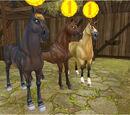 Pferdepreise