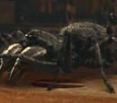 Carboniferous Arachnid