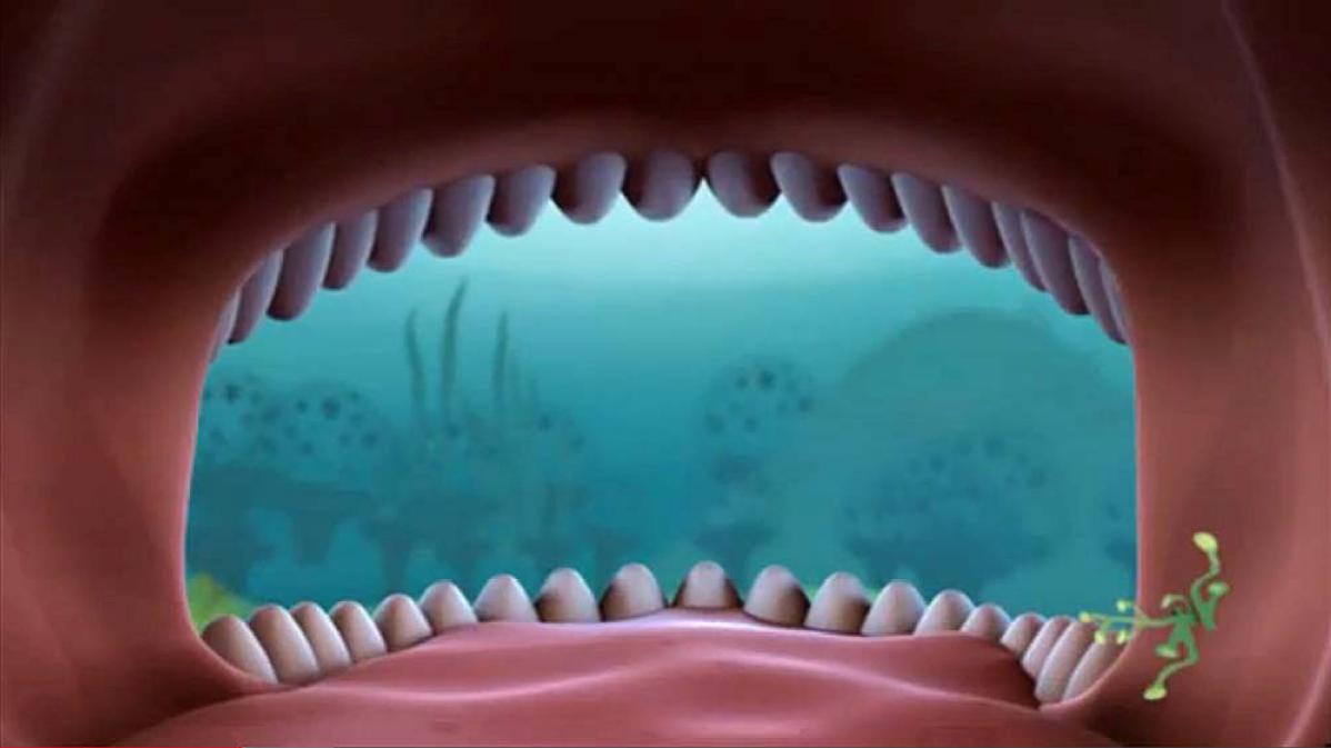 Whale Shark Octonauts Wiki