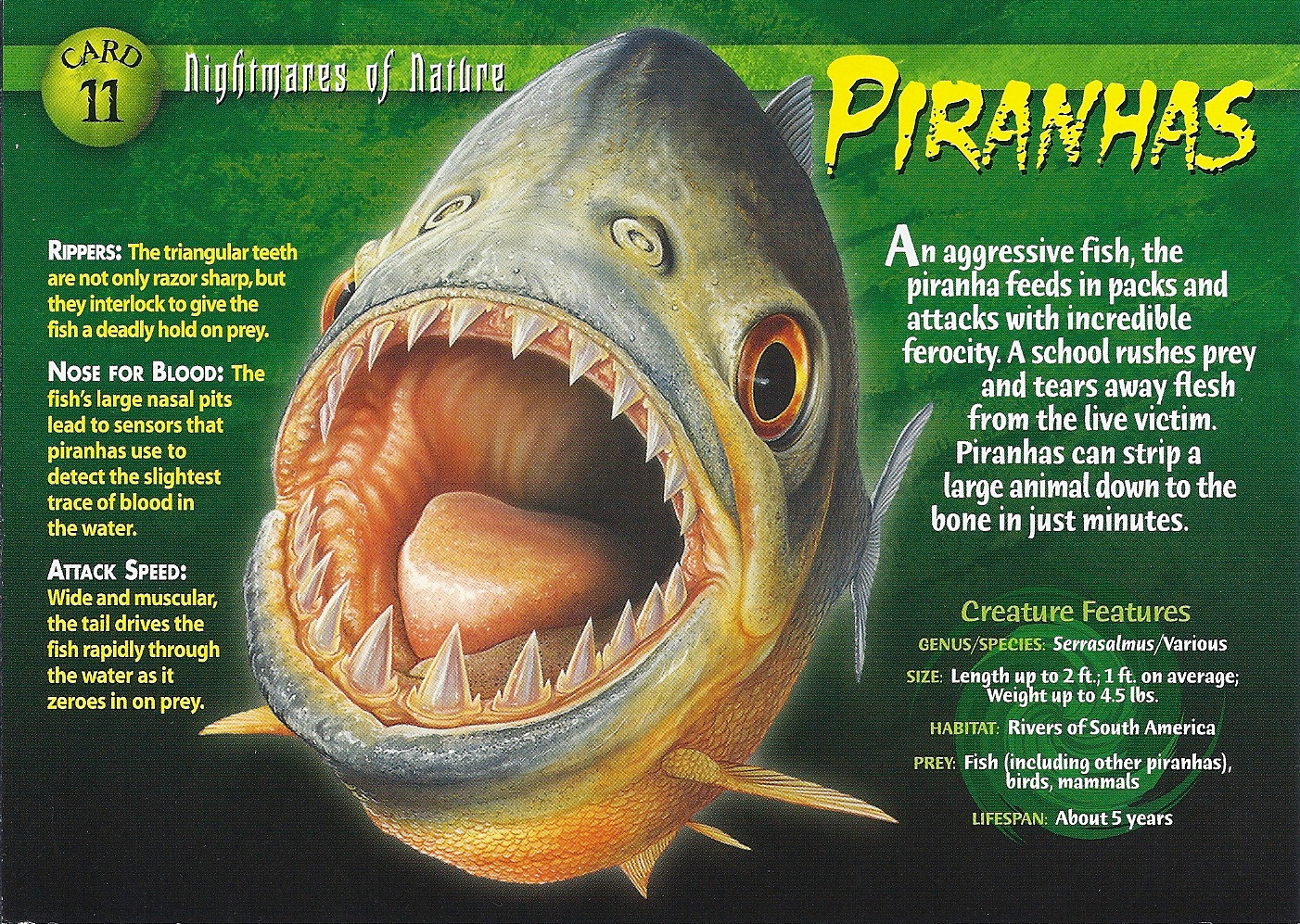 Piranhas Nightmares of...
