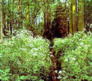 Atlantic mixed forests (PA0402)