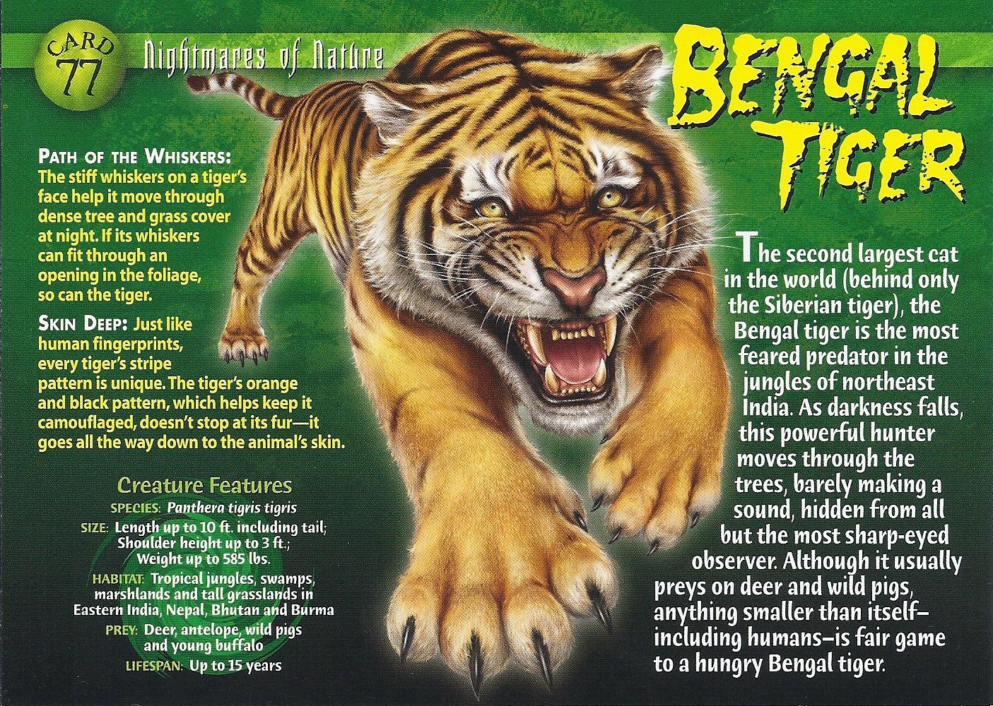 bengal tiger wierd nwild creatures wiki