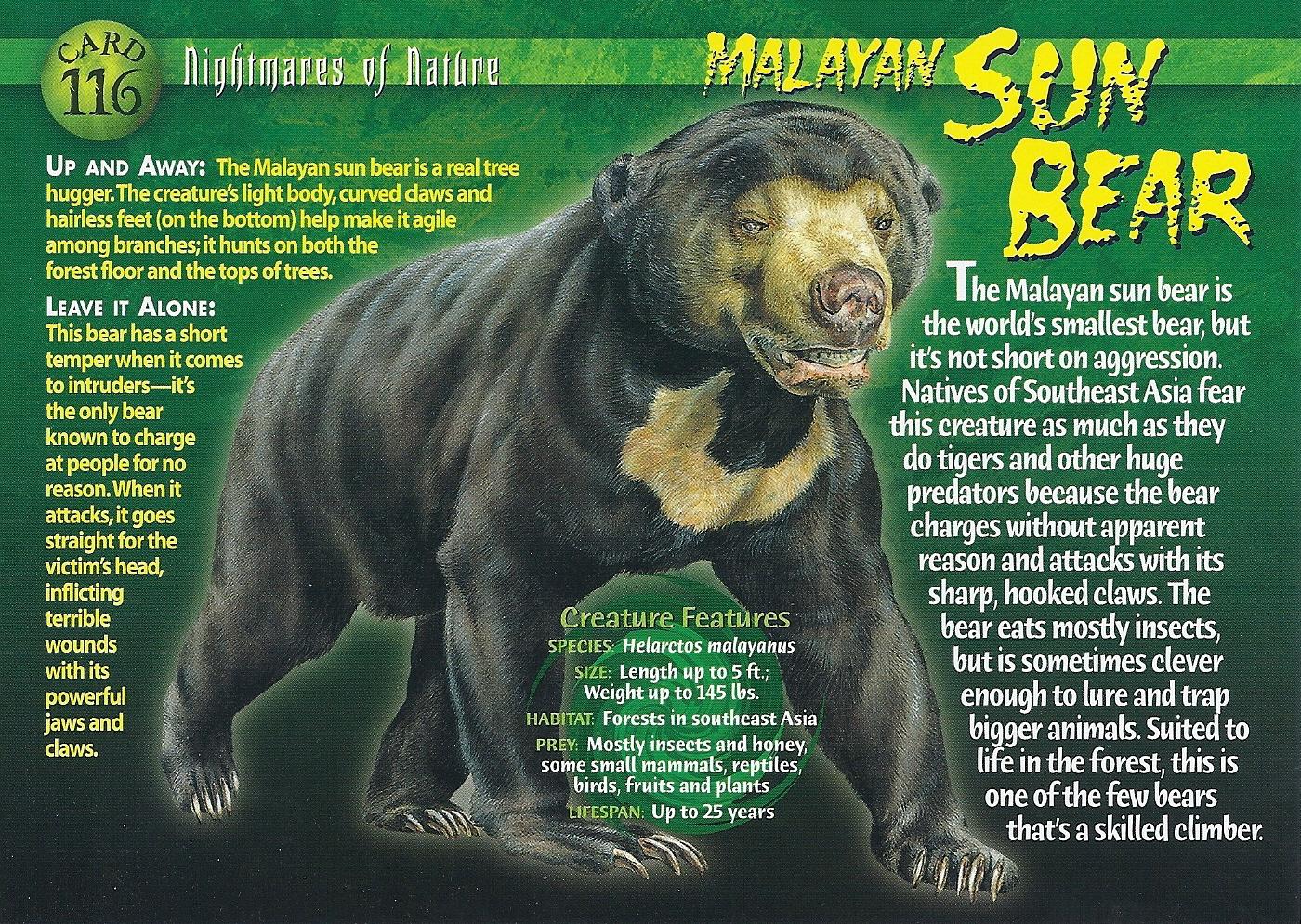Malayan Sun Bear Wierd N Wild Creatures Wiki