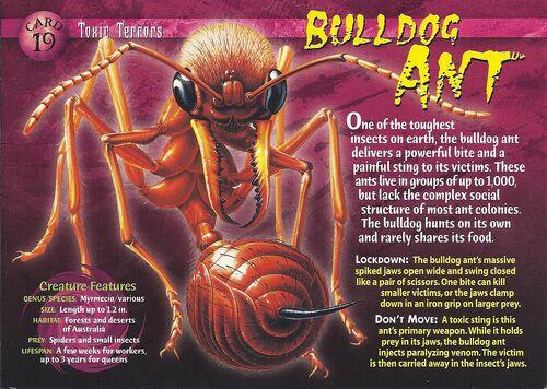 Bulldog ants vs army ants