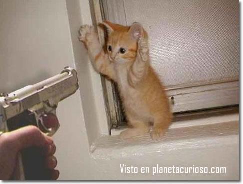 Megapost de imagenes de gatos, porque si :/