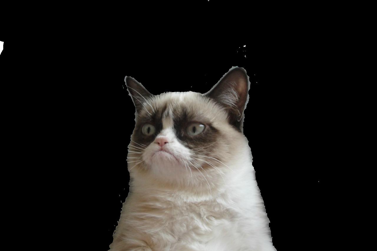 Grumpy Cat Transparent