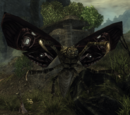 Insektoidy