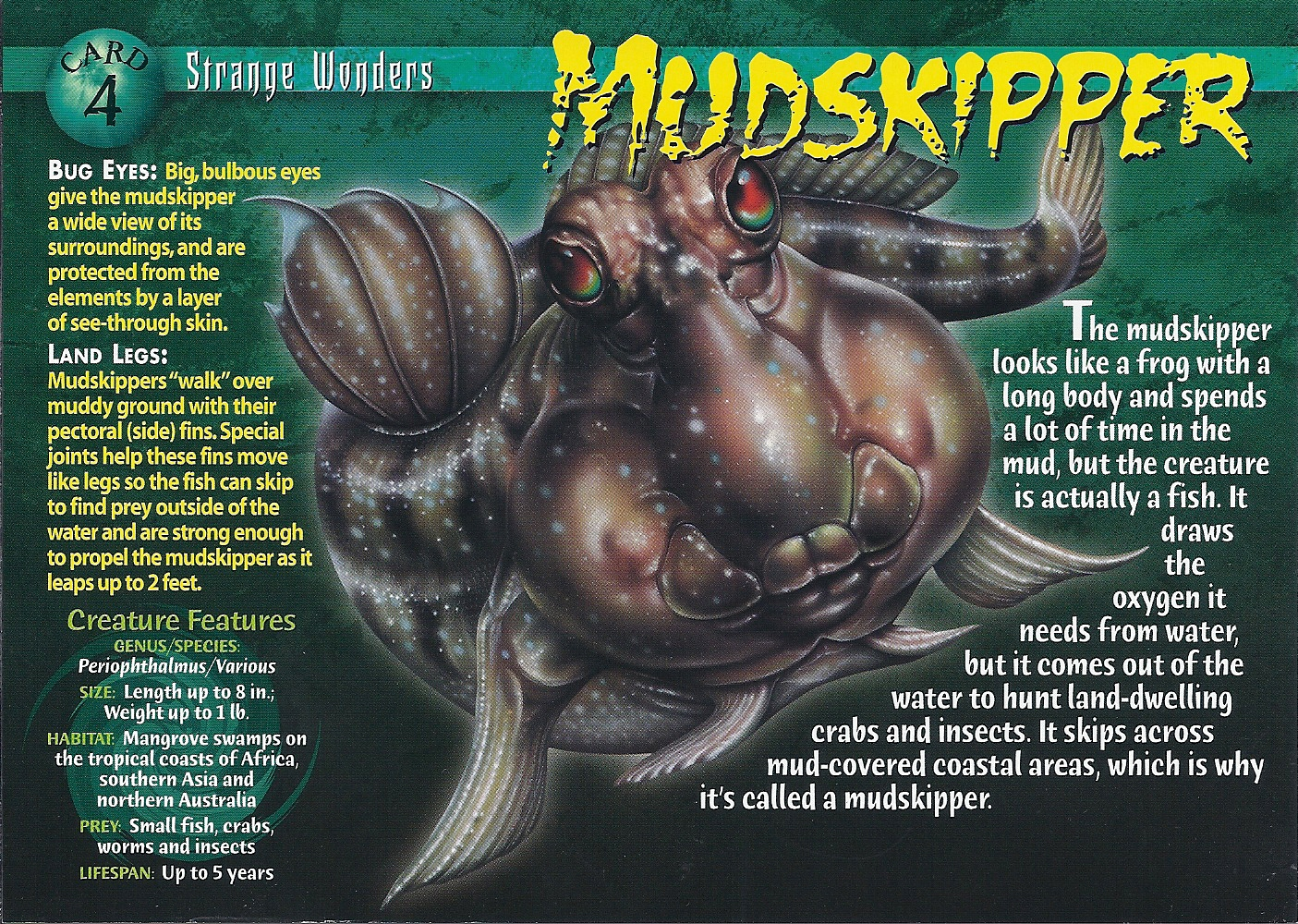 [Image: Mudskipper_front.jpg]