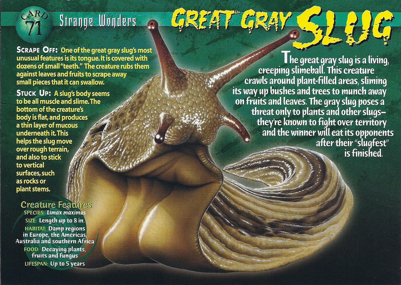 Great Gray Slug Wierd N Wild Creatures Wiki