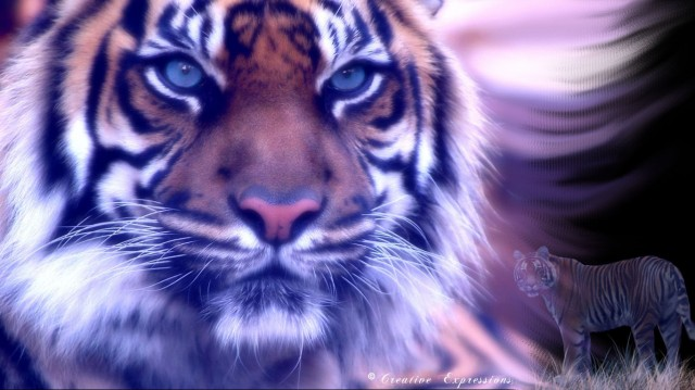 Image Fantasy Fire Tiger Wallpaper By Greeneagle777 .